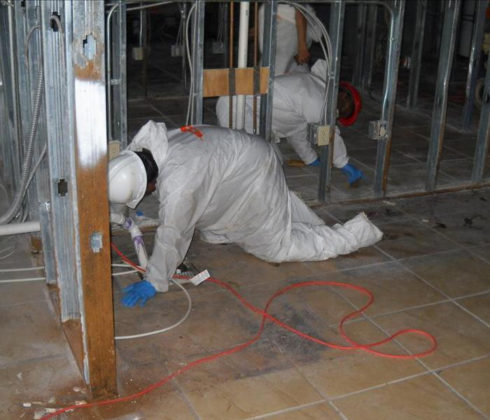 Commercial Mold Clean Up