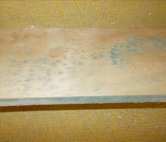 Mold growth on wood.