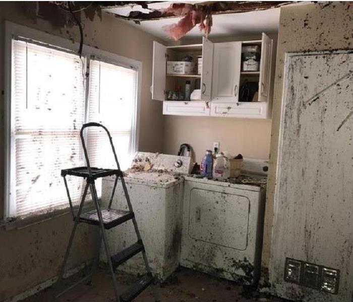 Water Damage What Is the Timeline For Water Damage Cleanup?