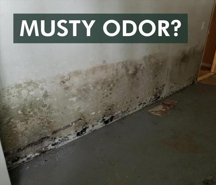 Mold Remediation Finally, An Explanation for Why Mold Smells Musty