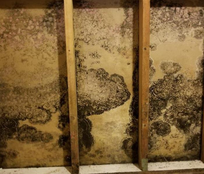 Mold Remediation Comparing and Contrasting Mold and Mildew