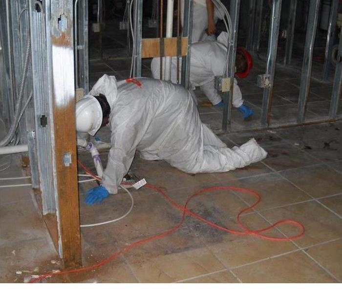 Mold Remediation Who Thinks Mold Is Interesting?