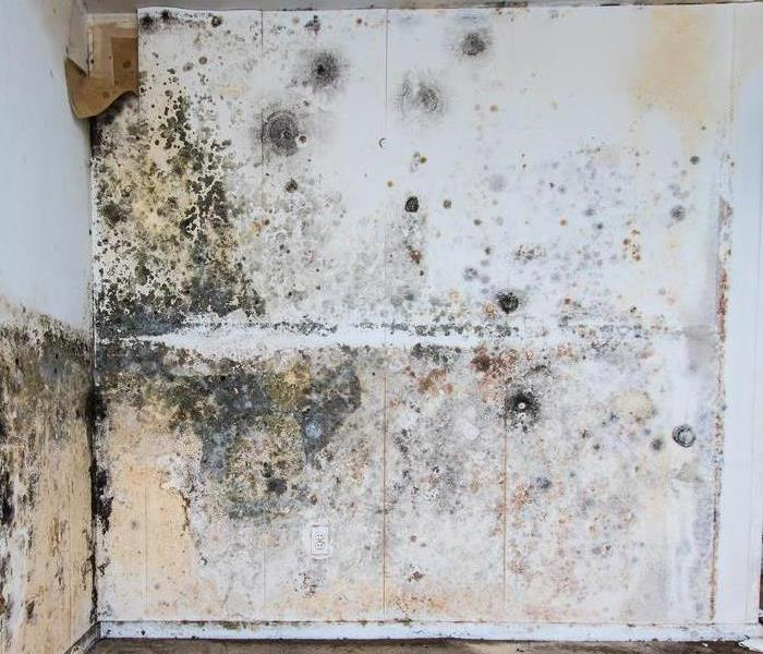 Mold Remediation When Nature Becomes an Art Critic