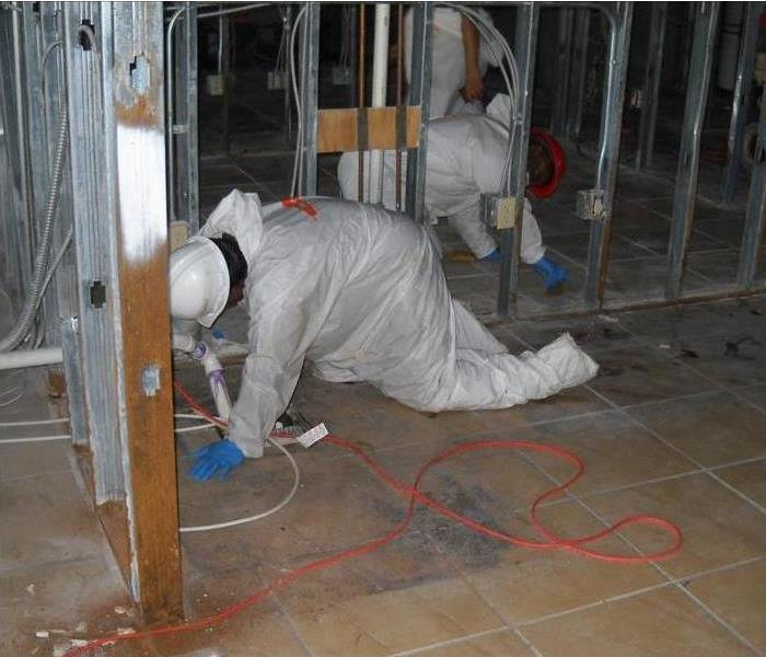 Mold Remediation Mold Damage Emergency Tips You Need
